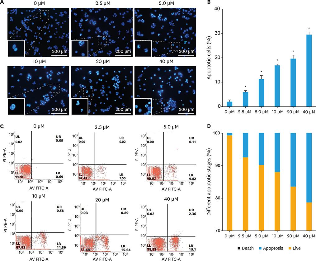 Pseudolaric acid B inhibits PAX2 expression through Wnt